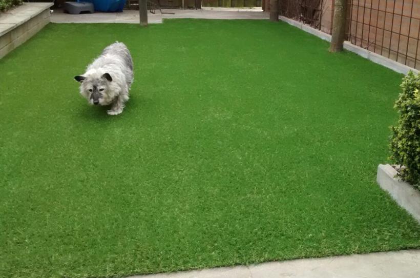 kunstgras-geschikt-voor-honden