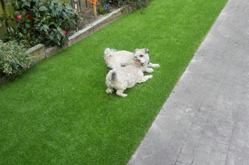 kunstgras-kleine-honden
